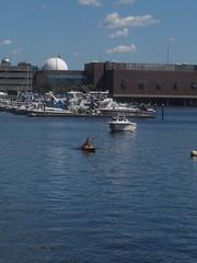 Bostonian returns (The Pej Media) Tags: cambridge boston boats mit charlesriver bostoncommons newburystreet yachts littleitaly northend bostonharbour prudentialbuilding bostonskyline downtownboston bostonpublic modernbakery bostonriver commonweathavenue comavebridge