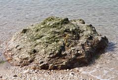 Glacial Erratic (sandy richard) Tags: usa newyork unitedstates geology wildwood calverton wildwoodstatepark newyorkstateparks sandyrichard longislandgeology sandrarichard