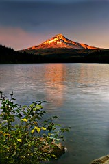 Trillium By Sunset Light (Darrell Wyatt) Tags: sunset summer mountain lake snow reflection trillium bush glacier mounthood winterinsummer