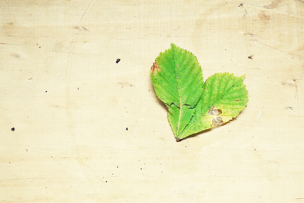 Heart Shaped Leaf - Fall
