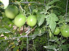 garden, sept 2011 005
