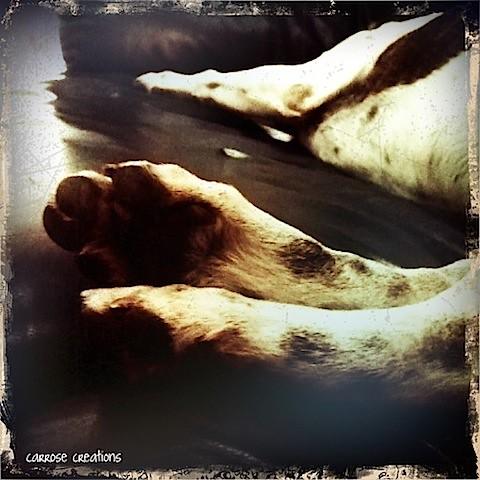 {365} 268 Doggy