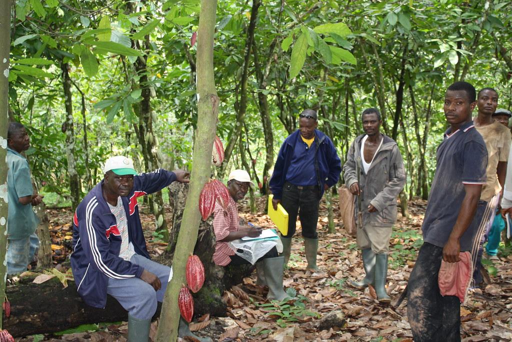 Inspection interne cacao bio Togo