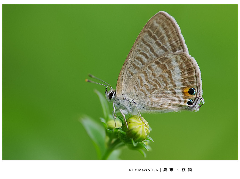 2011/11/27(日)BraveRoy 生態微距攝影講座