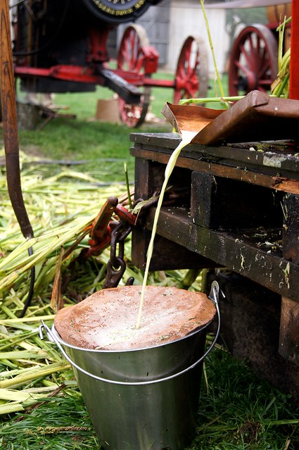 Making Sorghum Syrup 10