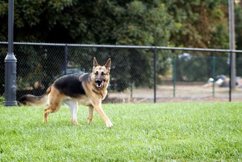 Dog Park - Woodland, Ca