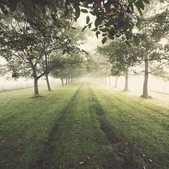 240 of 365 (Morphicx) Tags: autumn sunlight mist misty fog sunrise foggy thenetherlands loveit dew canon5d 365 canon1740f4l minitree 365shotsin365days