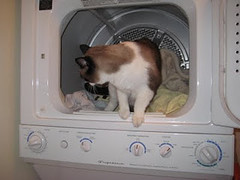 Reviewing dryers. (Cat Reports) Tags: cats funnycatpics techproducts catreports