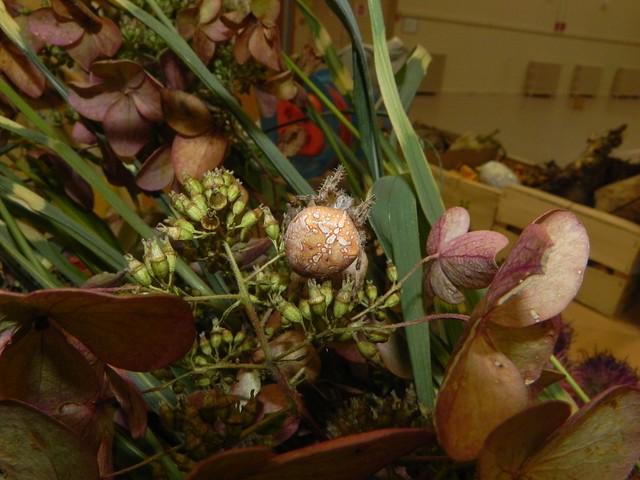 Epeire à 4 points parmi les fleurs coupées