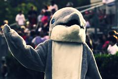 HHP Homecoming Football Dolphin (csteinmetz1) Tags: school photoshop football high nikon cs3 70210mm d90