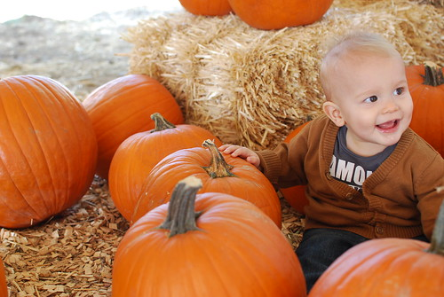 Pumpkin Patch, October 2011