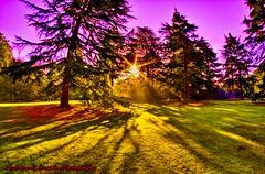 Ataraxia (Muzammil (Moz)) Tags: uk morning westlondon moz shaddows savillegardens ataraxia virginiawaters muzammilhussain