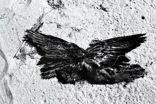 Dead Sea Bird