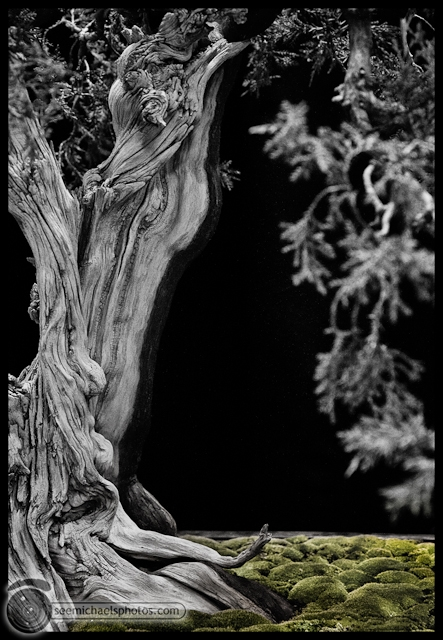 Bonzai Show at NC Arboretum 100811 © Michael Klayman-009