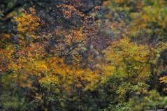 The lost palette  (MelindaChan ^..^) Tags: china autumn plant tree fall colors colorful bokeh multipleexposure mel foliage melinda sichuan jiuzhaigou palette   hbw chanmelmel melindachan