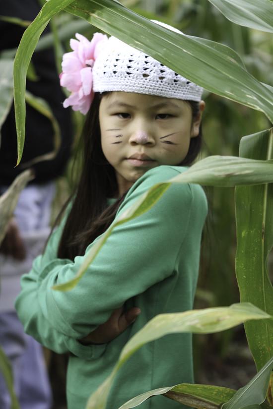 corn maze anna