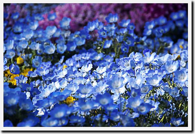 110417_154557_横浜_花と緑のスプリングフェア2011