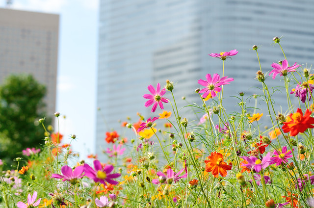 Cosmos in the city