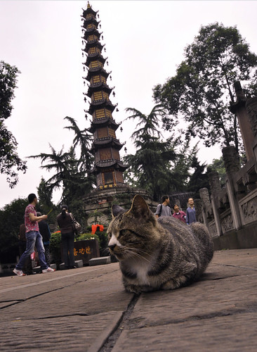 Ch'an Buddhist Cat & Pagoda, Wen Shu Temple