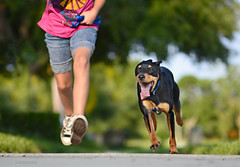 running home (Laurarama) Tags: family summer dog pet child action gap running sept petportrait gettycollection heritage2011 collectionp