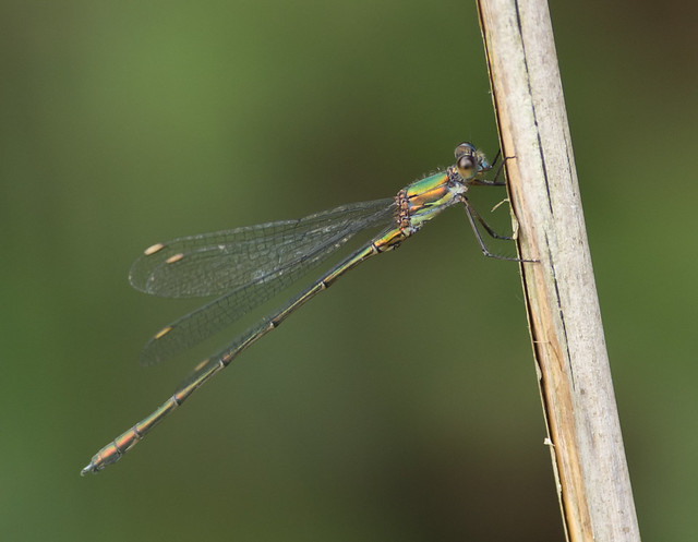 willow emerald best