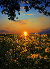 Daiseyland (Phil~Koch) Tags: morning flowers blue sunset red sun green love floral field vertical wisconsin clouds sunrise photography landscapes spring twilight peace earth farm natur scenic meadow inspired naturallight farmland serene agriculture inspirational horizons environement photocontesttnc11 philkoch myhorizonart