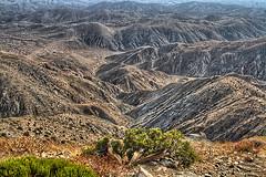 Joshua Tree (Josphine Runneboom) Tags: california mountains tree desert joshua joshuatree