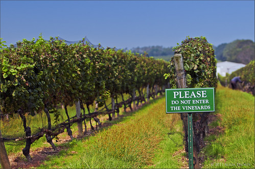 vineyards please by Alida's Photos