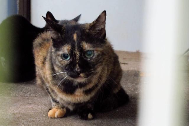 Today's Cat@2011-09-19
