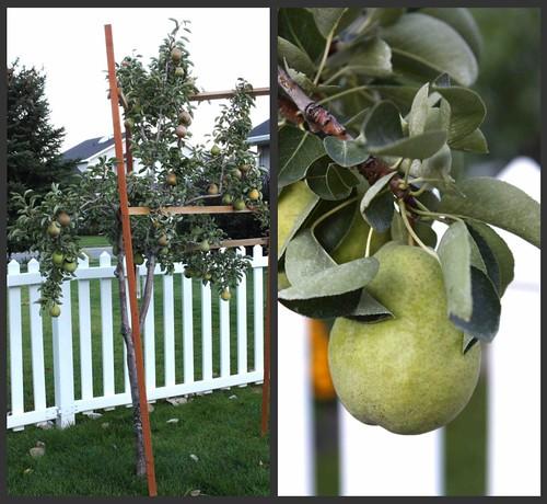 Garden Collage 1