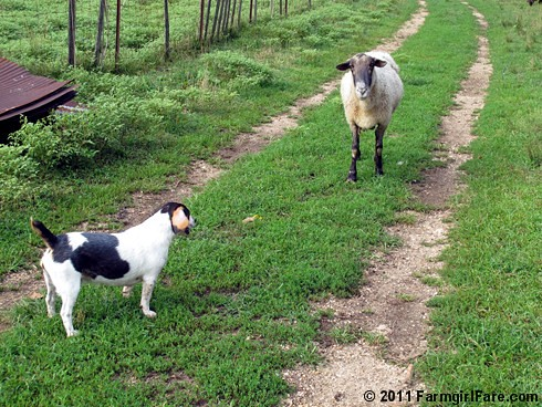 Beagle Bert and Big Chip 1 - FarmgirlFare.com
