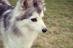 My dog, Jack