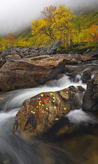 Autumn Colours, Kvalya (antonyspencer) Tags: autumn mountains fall leaves norway river landscape arctic troms troms