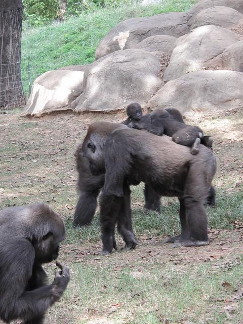Zoo 0286