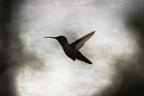 birdsanddeer 030 copy