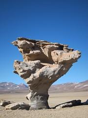 Arbol de Piedra