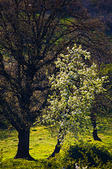 "Spring Contrasts • <a style=""font-size:0.8em;"" href=""http://www.flickr.com/photos/55747300@N00/6173443746/"" target=""_blank"">View on Flickr</a>"