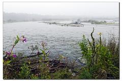 Wildfluss im Nebel (Helmut Reichelt) Tags: leica germany deutschland bavaria nebel au natur oberbayern fluss isar landschaft morgen m9 wildwasser wolfratshausen puppling