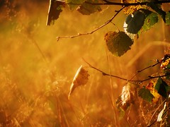 colours of the summer (JoannaRB2009) Tags: autumn trees light plants sun green nature leaves sunshine colours poland polska natura zielony indiansummer lodz soce d jesie wiato kolory licie drzewa roliny zotapolskajesie doublyniceshot doubleniceshot blinkagain