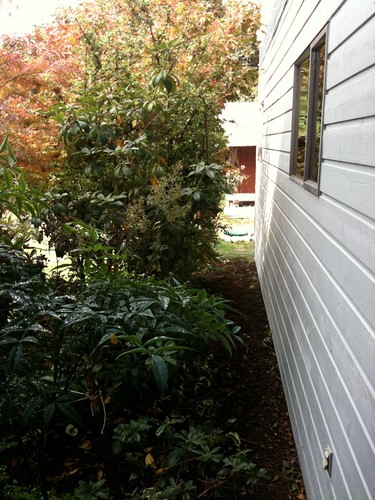 Distance kept between shrubs and house