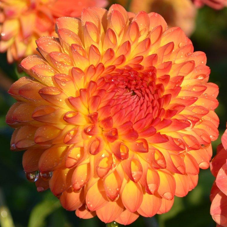 DSC_0026p_test_garden