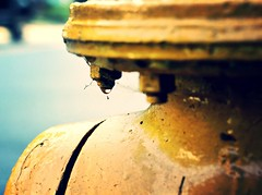 Hydrant (AndyM.) Tags: yellow hydrant canon 50mm waterdrop spiderweb southcarolina drop firehydrant travelersrest 60d