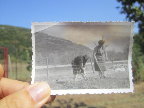 dear photograph (2)