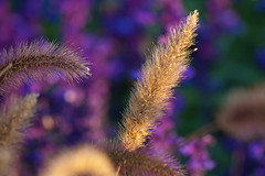 BuGa 2011 (Q-BEE) Tags: flowers fleurs blumen koblenz buga bundesgartenschau gartenschau