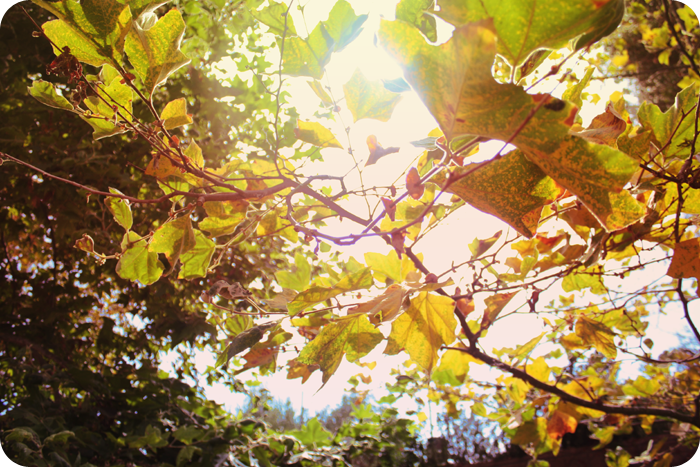 {september} sunflare | autumn