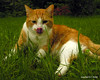 Yum (NTFlicker) Tags: nikoncoolpix8800 orangecattongue