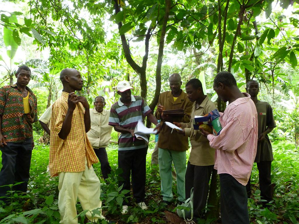 Visite collective de champ de cacao togo