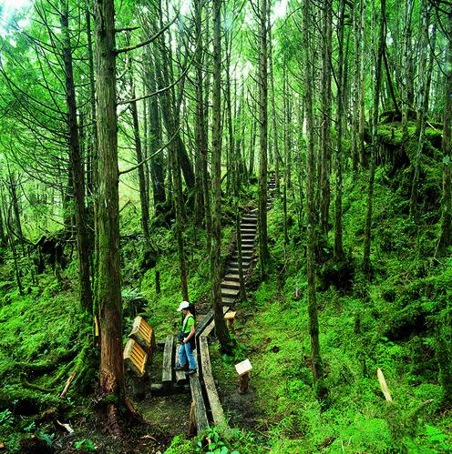 森林土壤是碳寶庫。(圖片來源:羅東林管處)