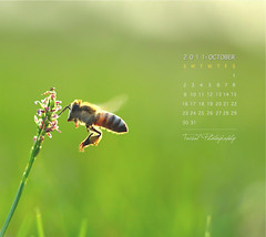 October Calendar (Faisal | Photography) Tags: flower macro green colors canon eos dof natural bokeh 100mm bee usm f28 50d canon100mmf28macrousm canoneos50d octobercalendar faisal|photography فيصلالعلي