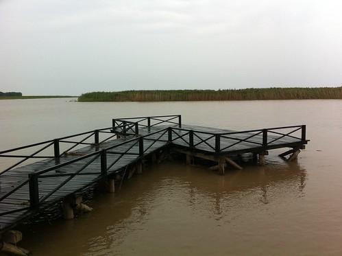 Wetlands at Chongming island